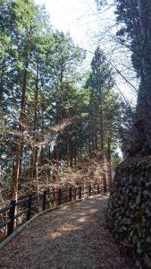 三頭大滝in西東京(檜原村)セラピーロード0